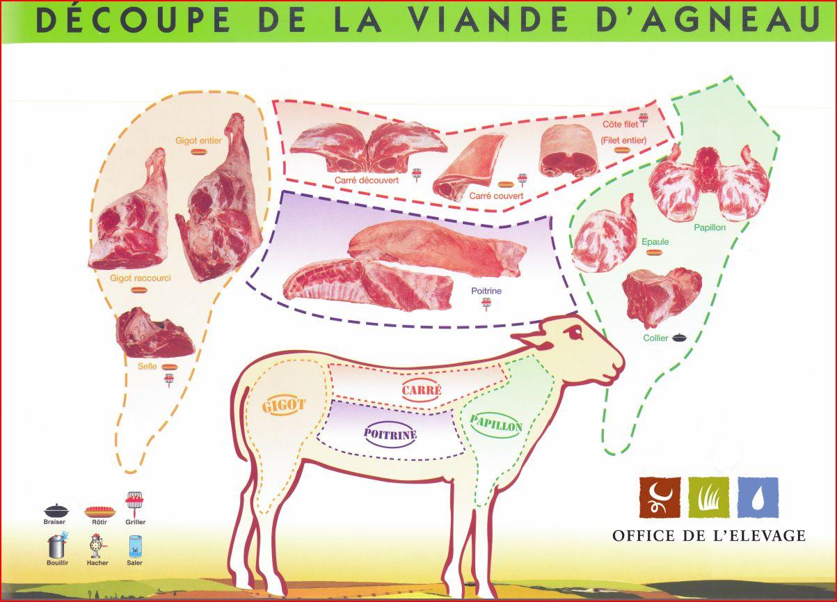 schema-decoupe-viande-agneau